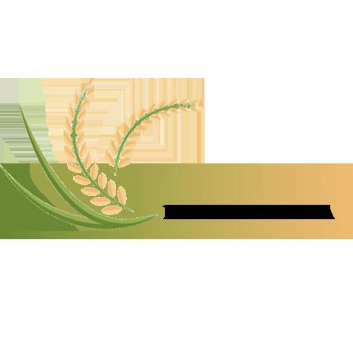 Gaoteeshirt